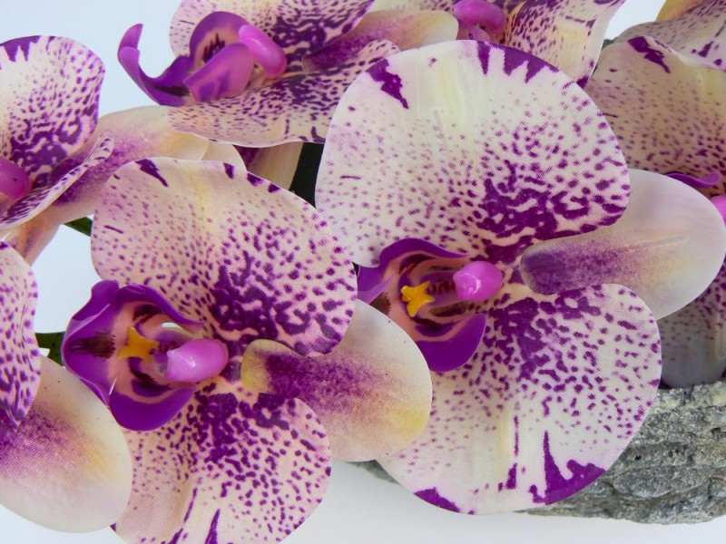 Orchidea stopka guma mix -